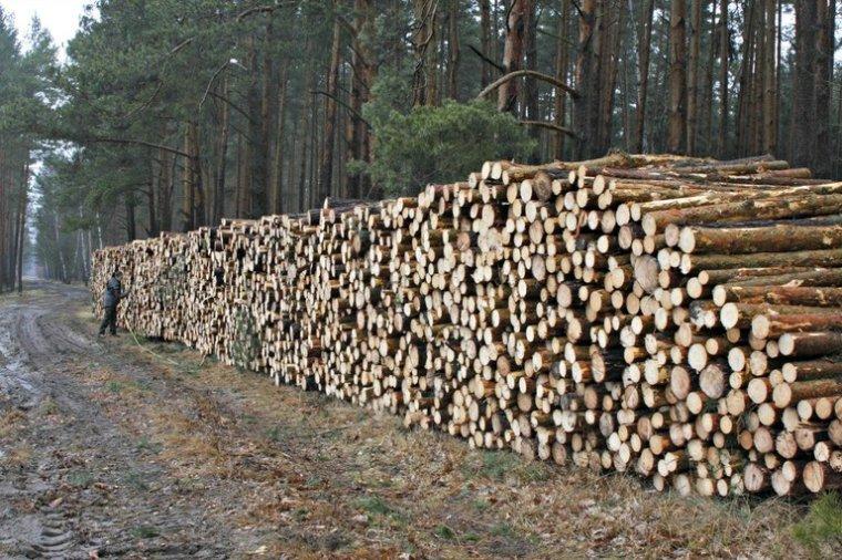 Lasy Państwowe podsumowują ofertową sprzedaż drewna na rok 2013