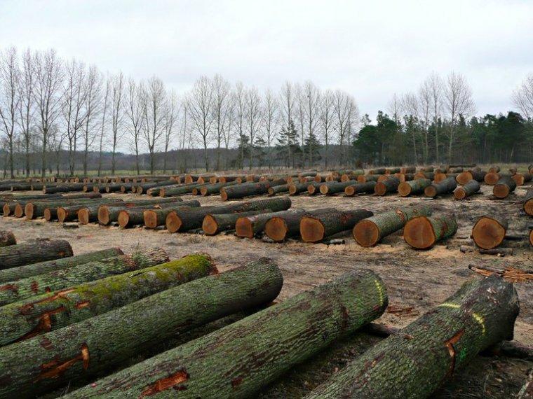 Submisja drewna cennego RDLP Szczecin