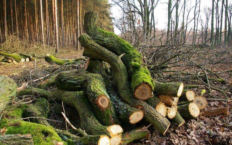 Lasy Państwowe rozważają wejście na rynek zielonej energii