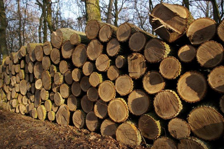 100 tys. zł grzywny i zakaz prowadzenia działalności handlowej za wprowadzenie na rynek nielegalnego drewna