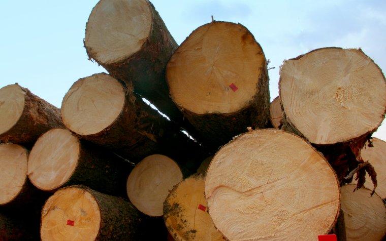 """Sprzedaż drewna na """"nowe inwestycje"""" od początku budzi kontrowersje"""