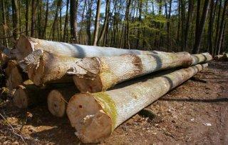Wyniki I etapu sprzedaży drewna z puli na nowe inwestycje