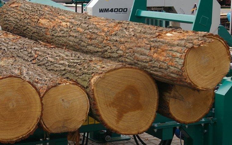 Pula drewna na nowe inwestycje rozeszła się w 85%