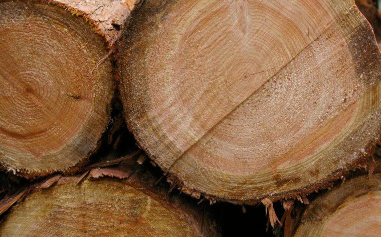 Polska głównym dostawcą surowca drzewnego do Niemiec