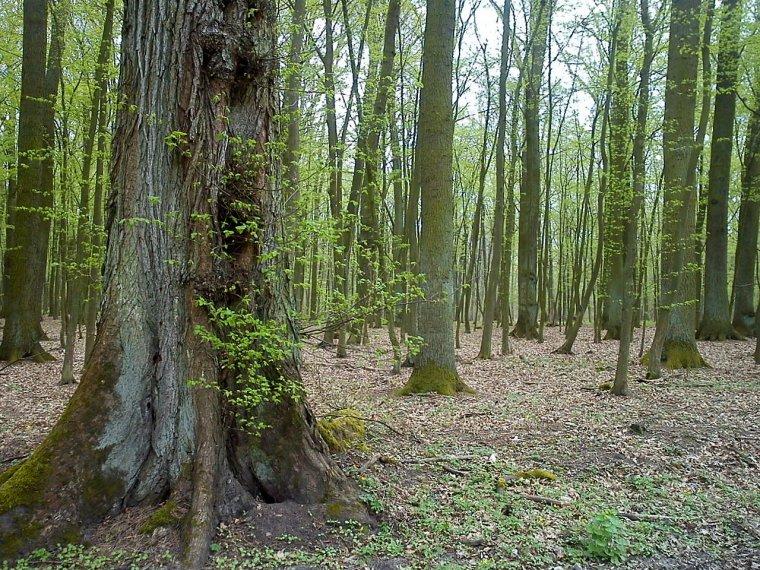 Polska gospodarzem negocjacji konwencji o lasach