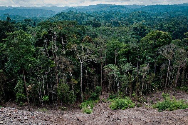 Czy CITES zapewnia legalność drewna?
