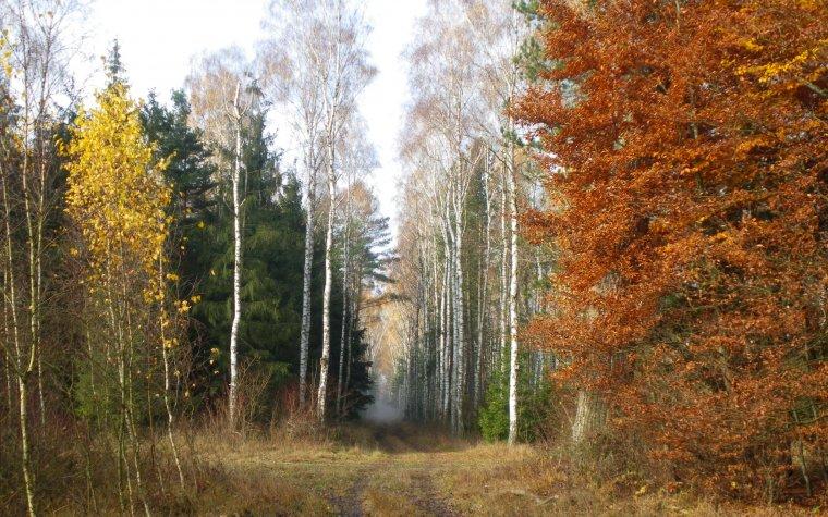 Nowa strategia UE dla sektora leśno-drzewnego
