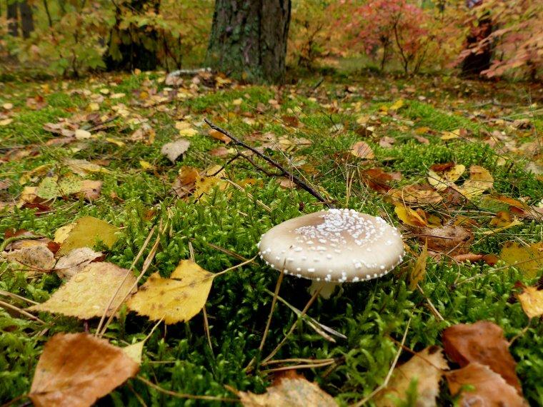 Ekonomiczne problemy realizacji wielofunkcyjnej gospodarki leśnej w Polsce