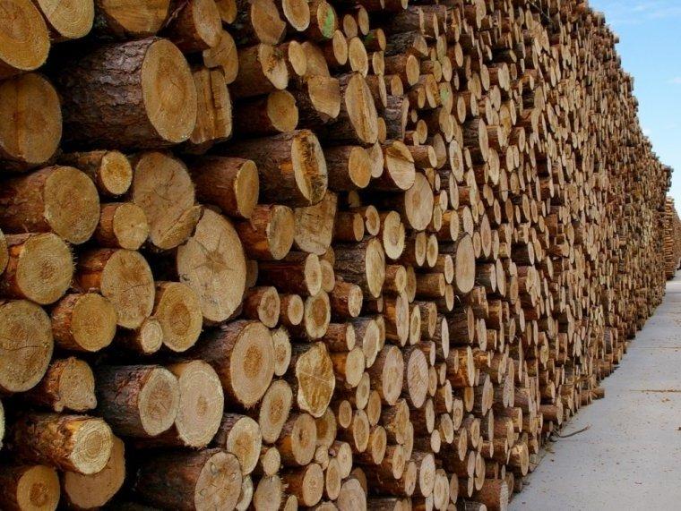 Jak usprawnić odbiór dużych mas surowca drzewnego