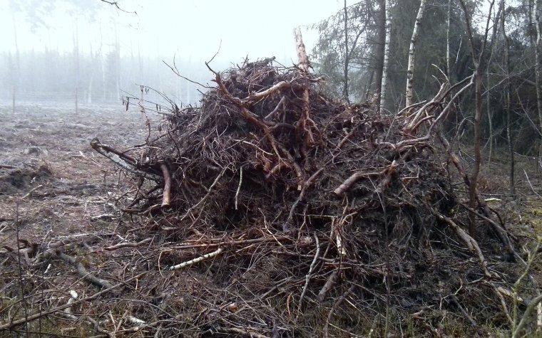 Definicja drewna w projekcie ustawy OZE poprawiona