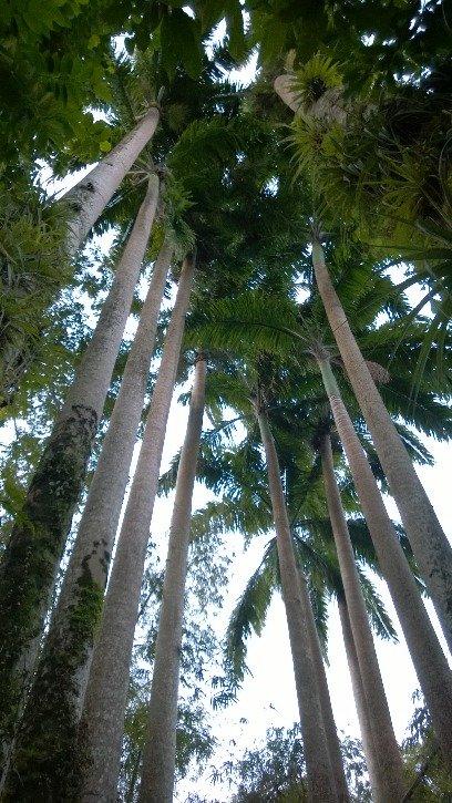 Palmy robią wrażenie...