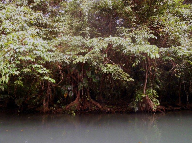 Las bagienny porastający brzeg Indian River