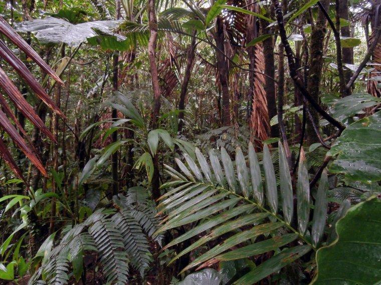 Wnętrze lasu mglistego