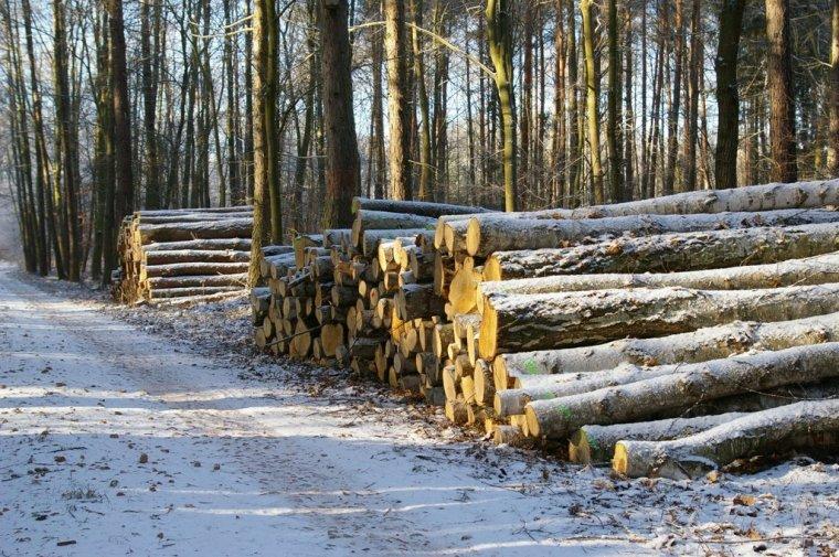 PiS przygotowuje wniosek do Trybunału Konstytucyjnego w sprawie znowelizowanej Ustawy o lasach