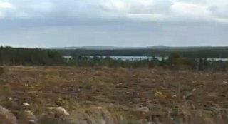 IKEA straciła certyfikat FSC w Karelii