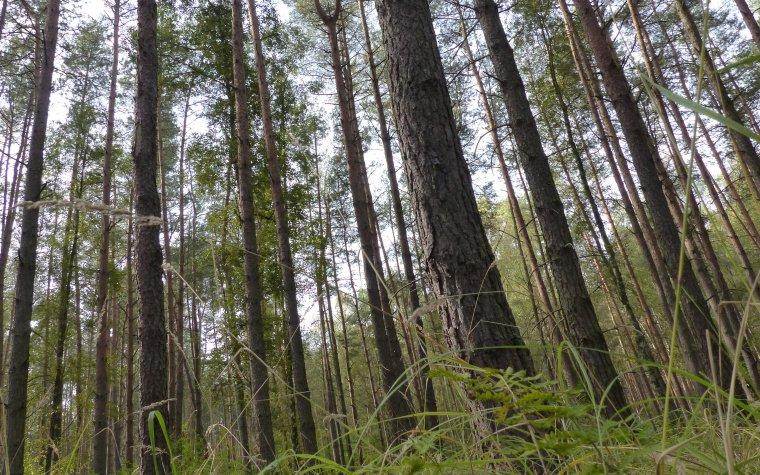 W Sejmie złożony został projekt zmiany konstytucji ws. Lasów Państwowych