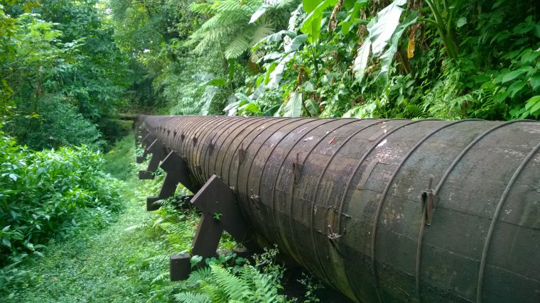 Klepki wykonane zostały z drewna daglezji, które nie występuje na wyspie.