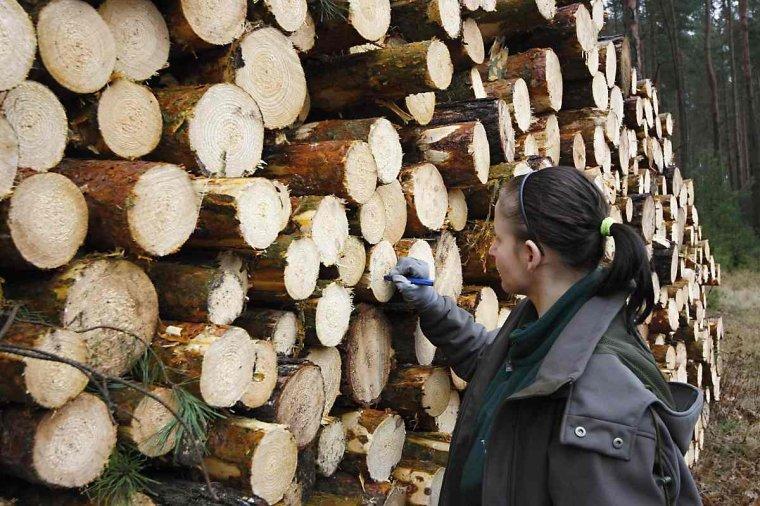 Analizy DNA w walce z kradzieżami drewna