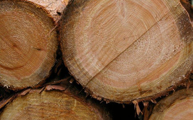 Lasy Państwowe nie udostępniają informacji na temat przebiegu i wyników aukcji na surowiec drzewny