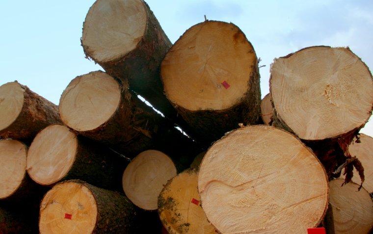 KPPD: Wzrost wartości zakupów drewna