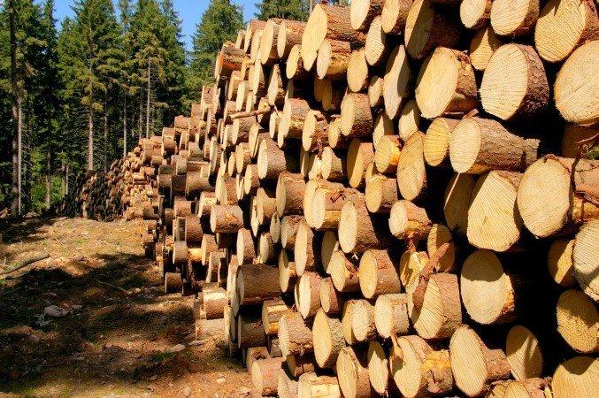 Austria największym importerem drewna w OECD