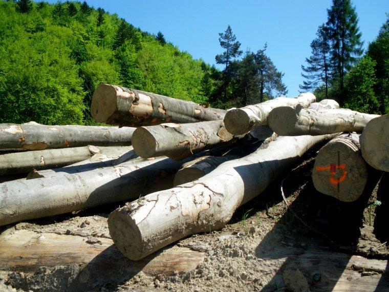 Projekt nowych warunków technicznych na drewno liściaste