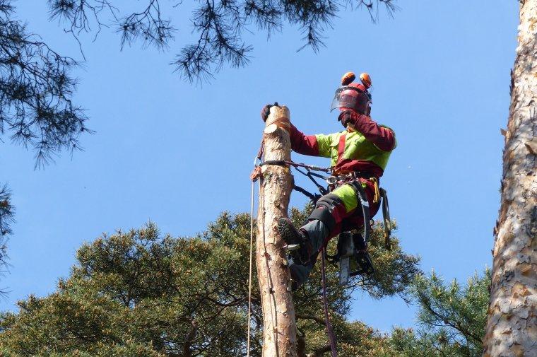 Zbuduj kompetencje i rozpocznij karierę! Program rozwoju dla Wydziału Leśnego