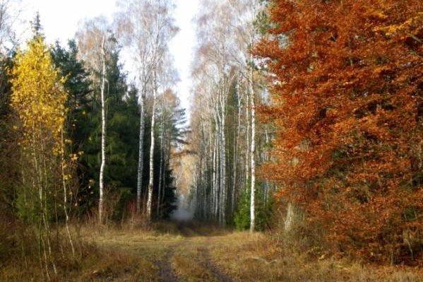 Zielona gospodarka: Cel sam w sobie czy szansa na promocję sektora leśnego?