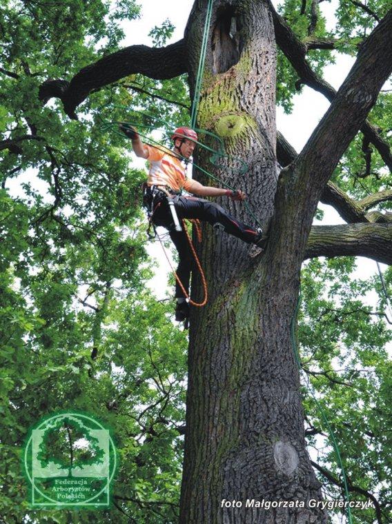 Mistrzostwa Europy we Wspinaczce Drzewnej