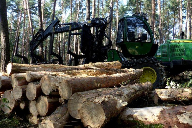 Sprzedaż drewna z Lasów Państwowych w 2015r. bez zmian