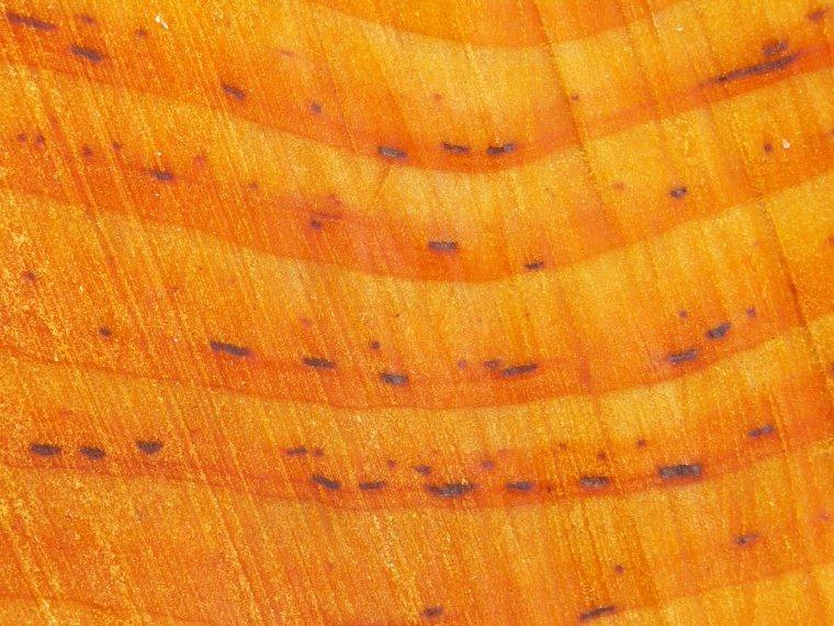 Plamki rdzeniowe - wada nie ujęta w żadnej normie dotyczącej wad drewna