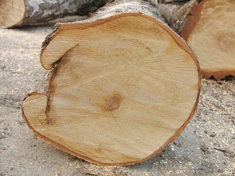 Zabitka otwarta jako przykład wady budowy drewna