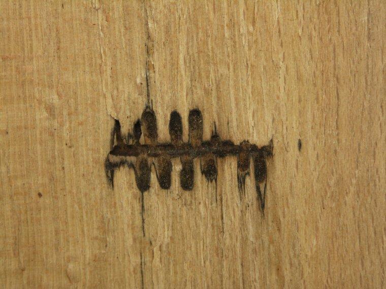 Chodniki owadzie jako przykład uszkodzeń mechanicznych