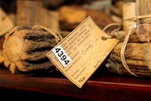 Zbiory ksyloteki prof. Rafalskiego obejmują również bogatą kolekcję lian i pnączy