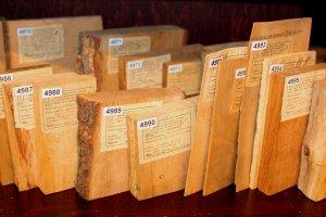 Fragment kolekcji – zbiór próbek drewna i fornirów różnych gatunków rodzaju Quercus