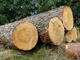Lasy Państwowe wykonają w 2015r. 300% planu