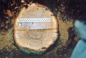 <small><center>fot. Nadleśnictwo Drewnica</small></center>