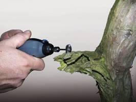 Pielęgnacja drzewek Bonsai przy pomocy Dremela
