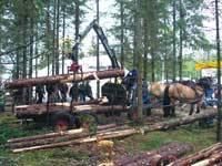 Targi leśne w Szwecji, 2007r. W Skandynawii zrywka konna jest popularna wśród prywatnych właścicieli lasów