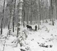 Koń w górach sprawdza się doskonale. Nadleśnictwo Jeleśnia, Leśnictwo Sopotnia Górna