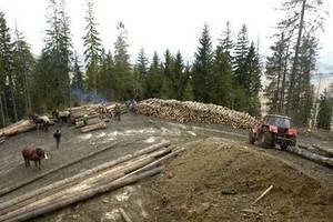 W jednym, tylko Nadleśnictwie Ujsoły w 2007 r. pozyskano 340 tys m3 drewna.