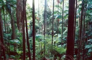 Las deszczowy