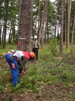 Konkurencja w lesie - ścinka i obalanie drzew na cel