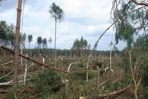 Szkody w lasach w okolicach Wielbarka