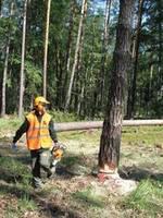 Na zawodach w Sieniawie ścinkę i obalanie drzew przeprowadza się w lesie.