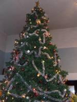 Żadna z tradycyjnych polskich rodzin nie wyobraża sobie świąt Bożego Narodzenia bez choinki