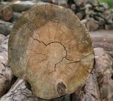 Drewno zarażone sinizną jest często zaatakowane również przez inne grzyby