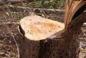 UE podjęła się wdrożenia środków wykluczających nielicencjonowane drewno, oraz poparcia i rozwijania wysiłków Konga mających na celu wzmocnienie systemu auditów