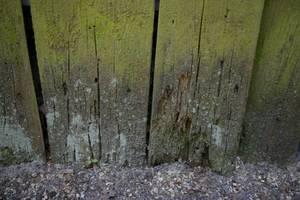 Rozkładajace się ściany drewnianego budynku. Na zdjęciu widać zarówno efekty działania grzybów, jak i znajdujące się na powierzchni glony i porosty.