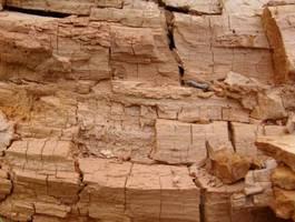 Jeden z ostatnich etapów rozkładu klasycznego drewna polegający na rozpadzie drewna na pryzmatyczne kostki